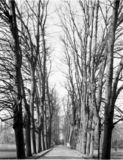 Thumbnail of Avenue of Limes, Trinity College - Cambridge University