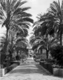 Thumbnail of The Garden of the Alcazar - The Palm Court - Spain